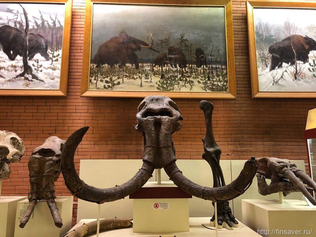 Палеонтологический музей. Отзыв.
